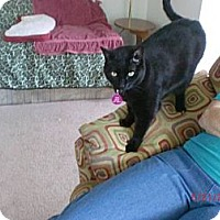 Adopt A Pet :: Pippi and Mercy - San Luis Obispo, CA
