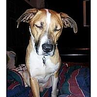 Adopt A Pet :: Captain - Louisville, KY