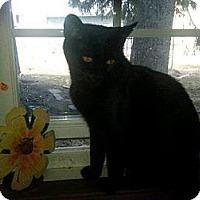 Adopt A Pet :: Stella - Norwich, NY