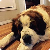Adopt A Pet :: Tater - Bellflower, CA