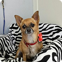 Adopt A Pet :: Bambi - Scottsdale, AZ