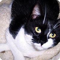 Adopt A Pet :: Utah - Redding, CA