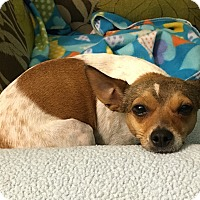 Adopt A Pet :: Brady - Homewood, AL