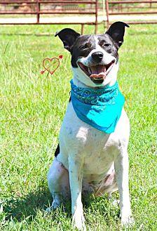 Australian Cattle Dog Mix Dog for adoption in Walton County, Georgia - Van
