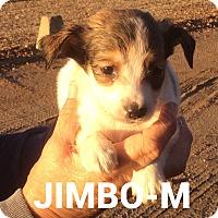 Adopt A Pet :: Jimbo - Southington, CT