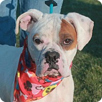 Adopt A Pet :: Prince Charming-PENDING - Garfield Heights, OH