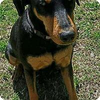 Adopt A Pet :: Delta - Dallas, TX