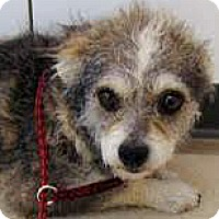 Adopt A Pet :: Cami-ADOPTION PENDING - Boulder, CO