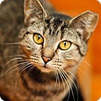 Adopt A Pet :: Merida - Brimfield, MA