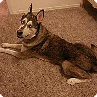 Adopt A Pet :: Hunter - Gilbert, AZ