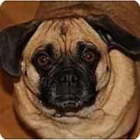 Adopt A Pet :: Alice - Seattle, WA