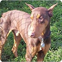 Adopt A Pet :: Roscoe--adopted!! - New Richmond, OH