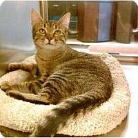 Adopt A Pet :: Arizona - Cincinnati, OH