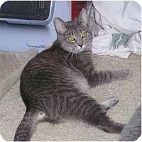 Adopt A Pet :: Char - Reston, VA