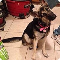 Adopt A Pet :: Kimber - Scottsdale, AZ