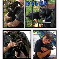 Adopt A Pet :: Dylan - La Habra, CA