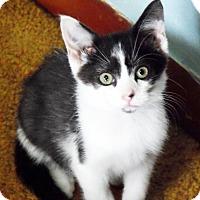 Adopt A Pet :: Benji - Xenia, OH