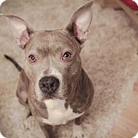 Adopt A Pet :: Sophie - Peoria, IL
