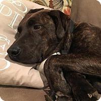 Adopt A Pet :: Aaron - Columbia, MD