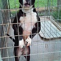 Adopt A Pet :: Lightning - Marianna, FL