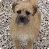 Adopt A Pet :: Maxwell - Oswego, IL