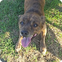 Adopt A Pet :: Roscoe - Weatherford, TX