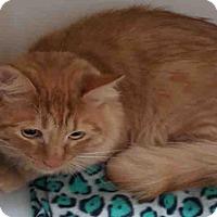 Adopt A Pet :: RUSTY - Bakersfield, CA