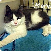 Adopt A Pet :: Meryl - Ocean City, NJ