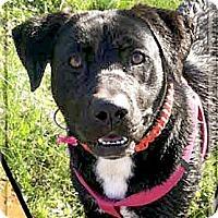 Adopt A Pet :: Twilight URGENT - Sacramento, CA