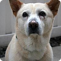 Adopt A Pet :: Coco - West New York, NJ
