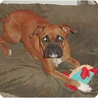 Adopt A Pet :: Journey - Thomasville, GA