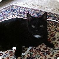Adopt A Pet :: Spook - Richmond, VA