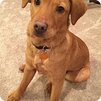 Adopt A Pet :: Abel - Spring Valley, NY