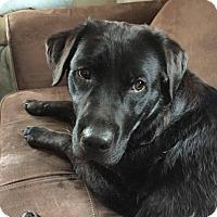 Adopt A Pet :: Mya ~ Adoption Pending - Youngstown, OH