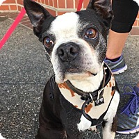 Adopt A Pet :: Paddy - San Francisco, CA