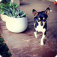 Adopt A Pet :: Jack - Yuba City, CA