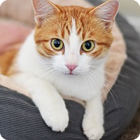 Adopt A Pet :: A.J. - Xenia, OH