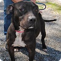Adopt A Pet :: Thor - Ridgeland, SC