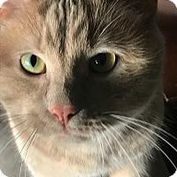 Adopt A Pet :: Charlie - Mount Clemens, MI