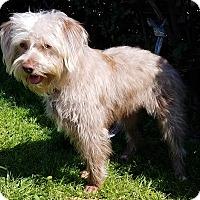 Adopt A Pet :: Harriet - Los Angeles, CA