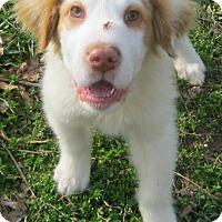 Adopt A Pet :: Slussy - Hillsboro, OH
