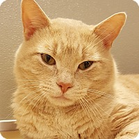 Adopt A Pet :: Lester - Grayslake, IL