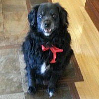 Adopt A Pet :: Buddy (Courtesy Post) - Asheville, NC