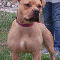 Adopt A Pet :: Trixie - Somerset, KY