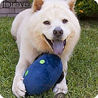 Adopt A Pet :: BRAVO - Warren, NJ