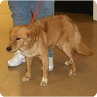 Adopt A Pet :: Danny - Toronto/Etobicoke/GTA, ON