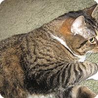 Adopt A Pet :: Delilah - N. Billerica, MA