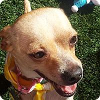 Adopt A Pet :: Conner - Scottsdale, AZ