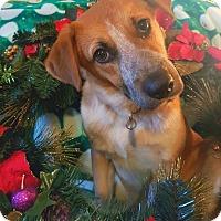 Adopt A Pet :: Raelynn - Knoxville, TN