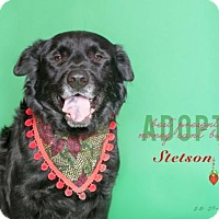 Adopt A Pet :: Stetson - Boston, MA